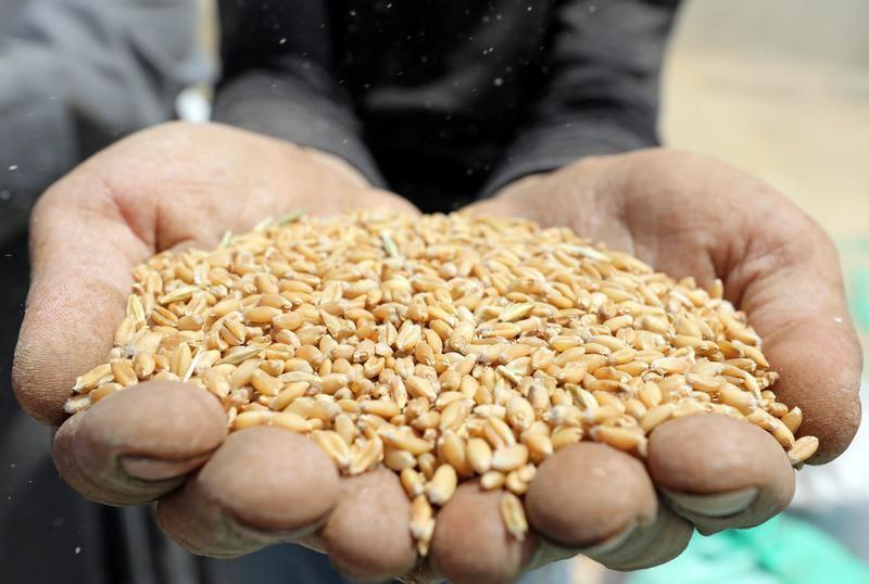 متحدث: الاحتياطي الاستراتيجي للقمح في مصر 4.6 مليون طن ويكفي الاستهلاك لنحو 6 أشهر