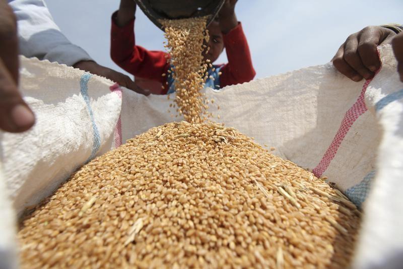 السعودية تشتري 660 ألف طن من الشعير في مناقصة