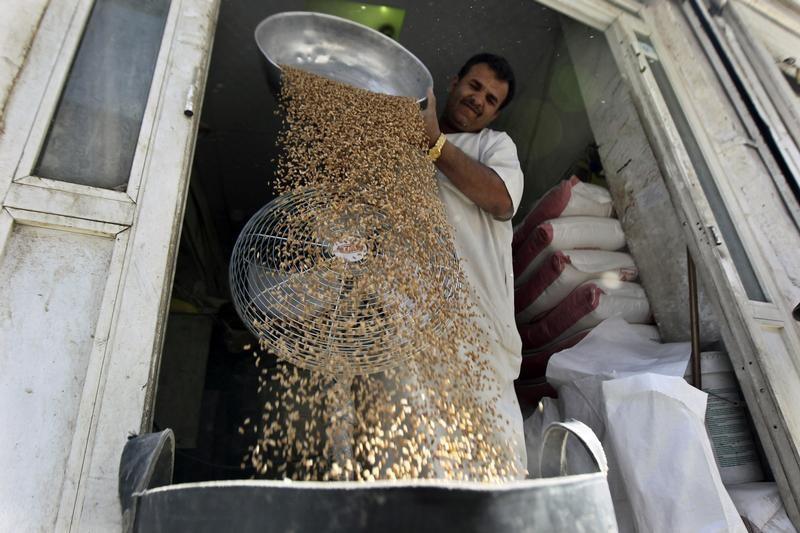 تجار: تونس تطرح مناقصة لشراء 50 ألف طن من علف الشعير
