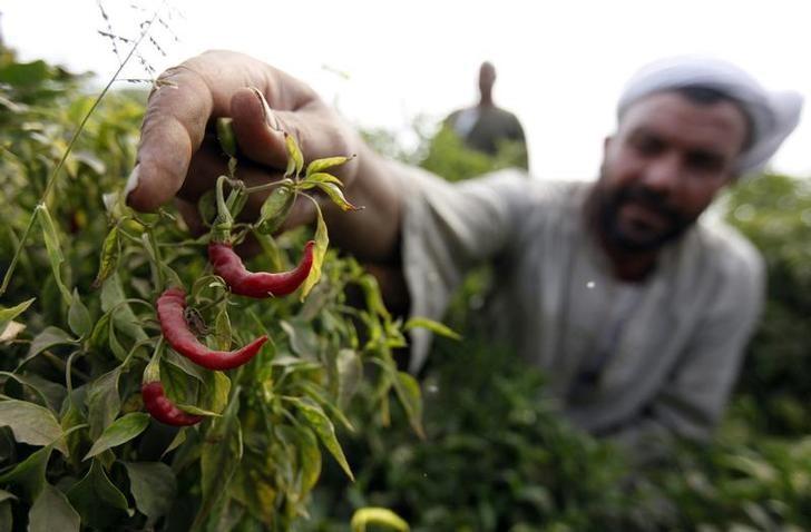 وزير: وفد مصري يزور دولا عربية الشهر المقبل لحل مشكلات تتعلق بالتصدير