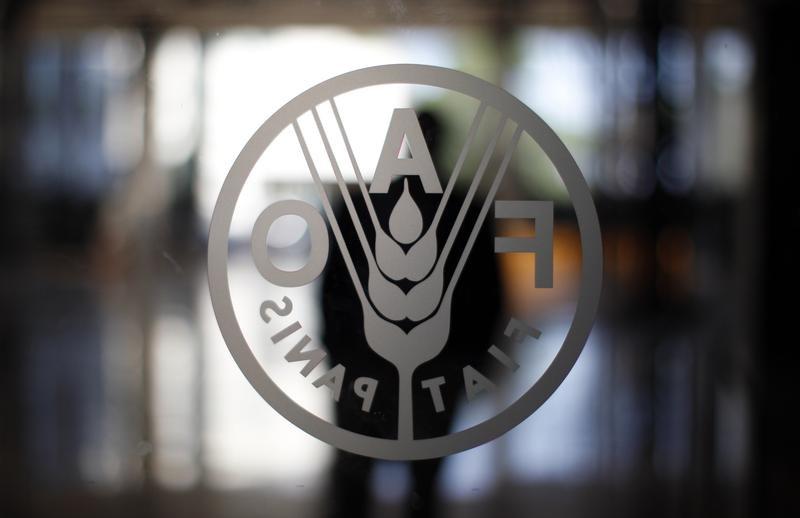 فاو: أسعار الغذاء العالمية تتراجع في نوفمبر