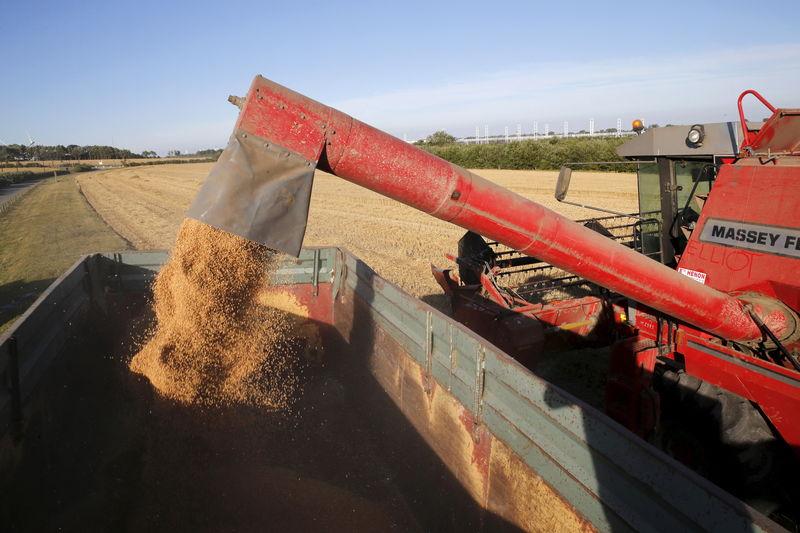 تجار: الأردن يشتري 50 ألف طن من القمح الصلد في مناقصة
