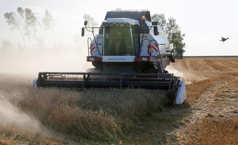 مصر تشتري 295 ألف طن من القمح في مناقصة