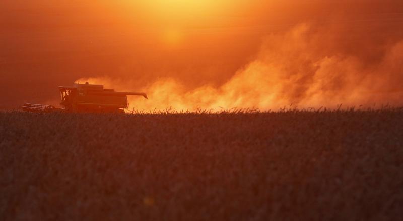 روسيا تهدف لزيادة طاقة تصدير الحبوب 50% في غضون ثلاث سنوات